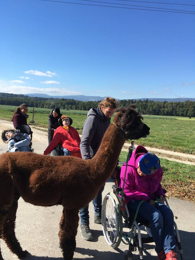 Lamas mit den Kindern.